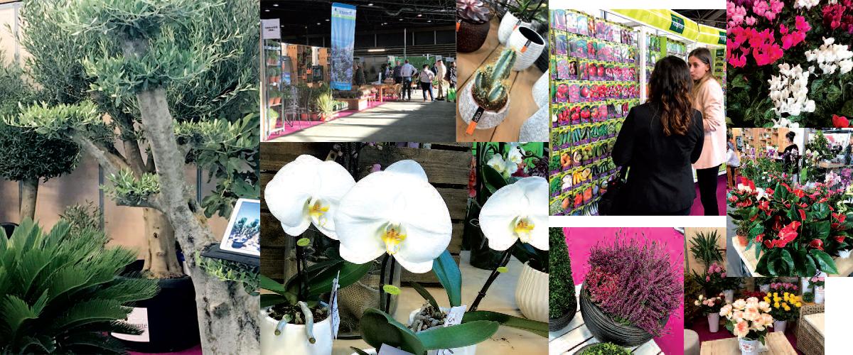 Franchise villaverde premier r seau de jardineries for Www villaverde fr
